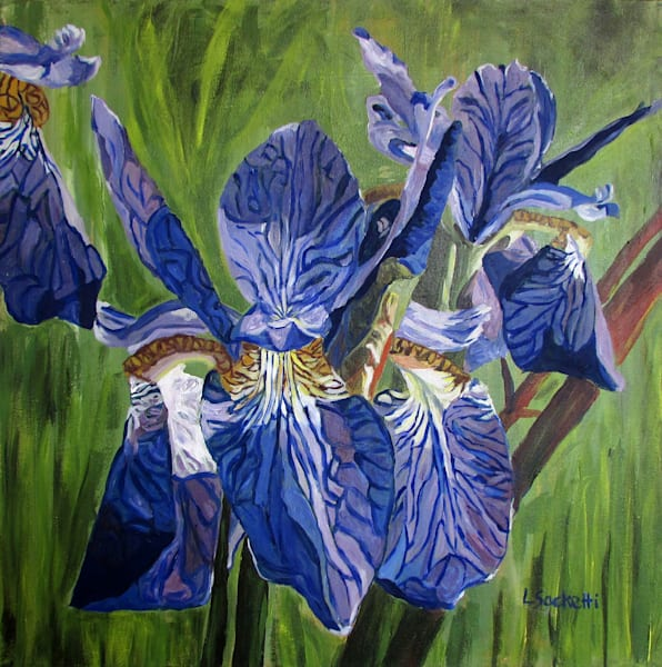Purple Iris Art | Linda Sacketti