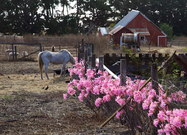 Horse With Flowers Art | Divinicity