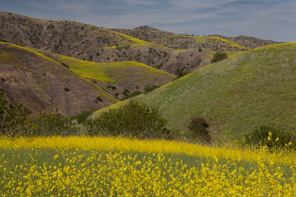 Spring In So Cal 2 Photography Art | Leiken Photography