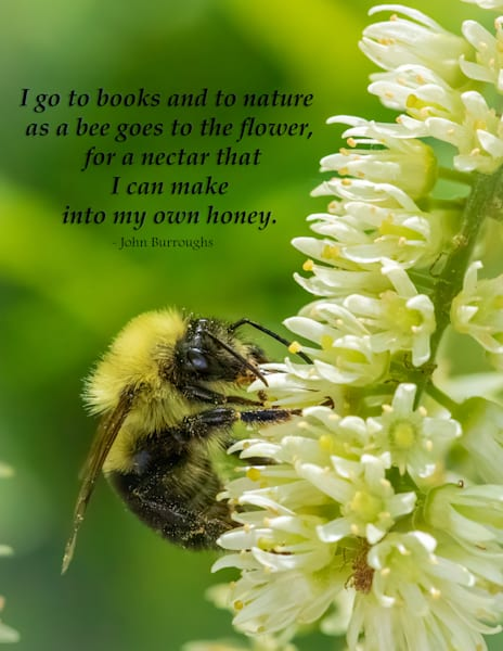 I go to books  as a bee goes to the flower