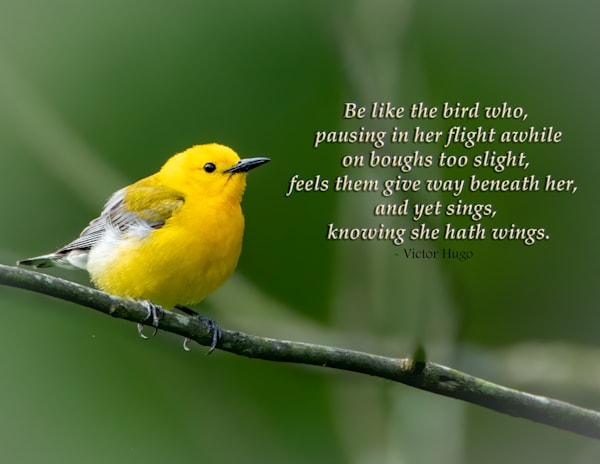 Be Like the Bird..Knowing She Hath Wings
