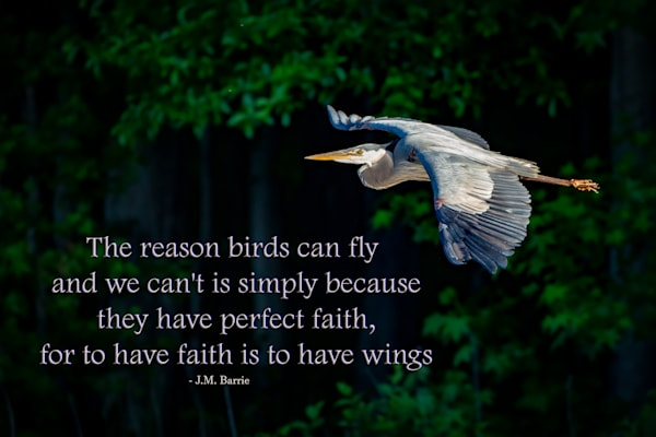 To Have Faith is to Have Wings