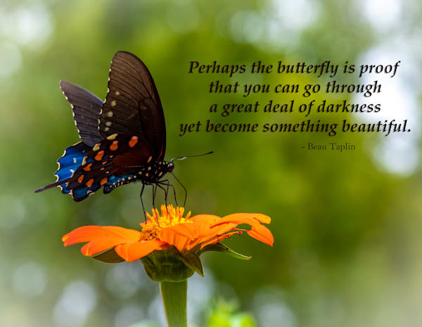 Perhaps the butterfly is proof - Swallowtail