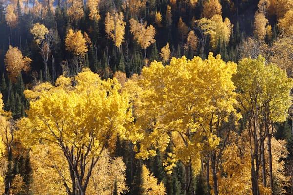 Fall Trees On Route 61, Northern Minnesota Photography Art | Lauramarlandphoto.com