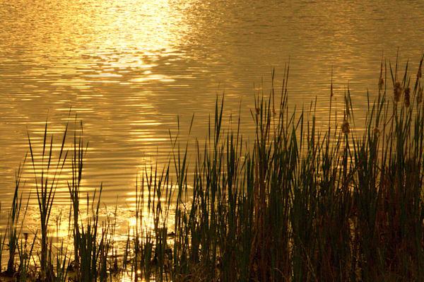 Golden Sunrise Photography Art | Lauramarlandphoto.com