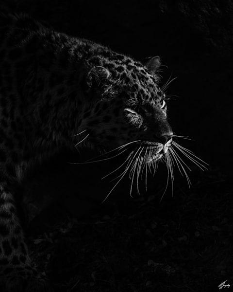 Darkness Art | TG Photo