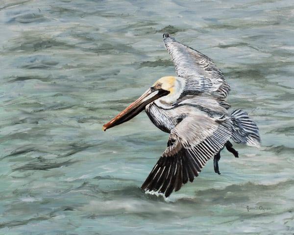 Ocean Pelican