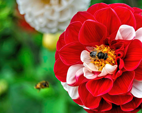 Lismore Gardens Photography Art | RAndrews Photos