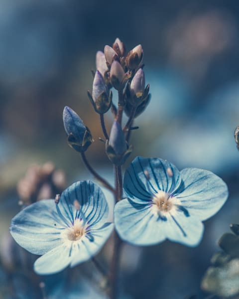 Spring In The Softest Blue  Photography Art   Tamea Travels