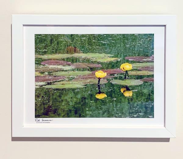 Pond Lilies Framed Clearance