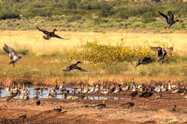 Wildlife and Nature Photographs