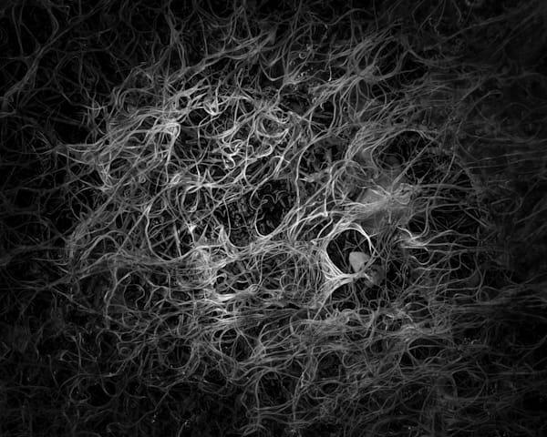 Tangle Of Circles Photography Art | matt lancaster art