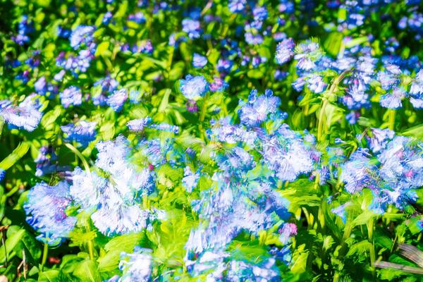Field Of Flowers Photography Art | Cerca Trova Photography