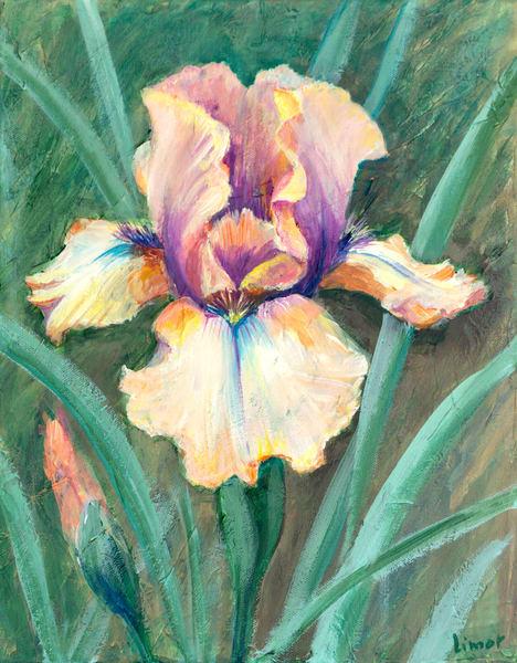 Iris Print Art   Limor Dekel Fine Art