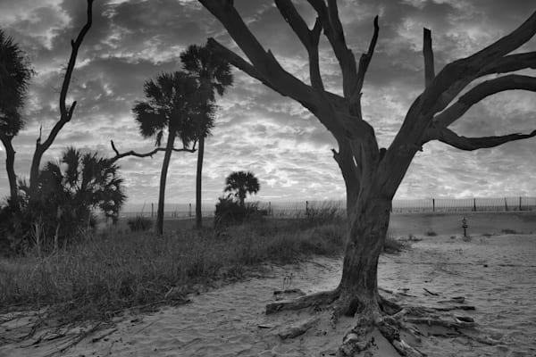 Famous Tree Photography Art   Willard R Smith Photography