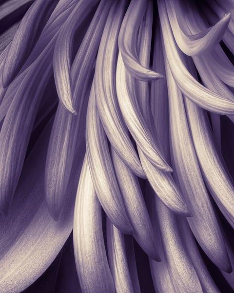 Flowing Petals 2