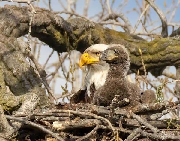 Look like an eagle