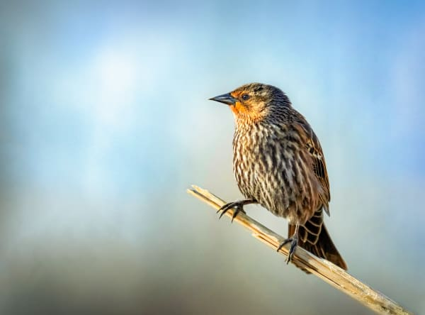 Perched In The Marshland Photography Art   Trevor Pottelberg Photography