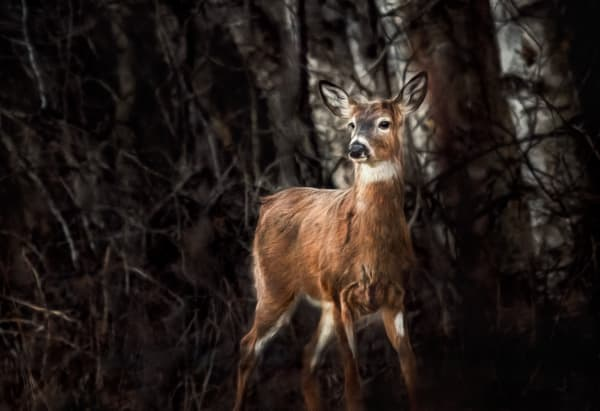 Spring Fever Photography Art | Trevor Pottelberg Photography