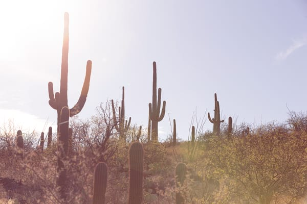 Desert Sunsets Photography Art   Nathan Larson Photography