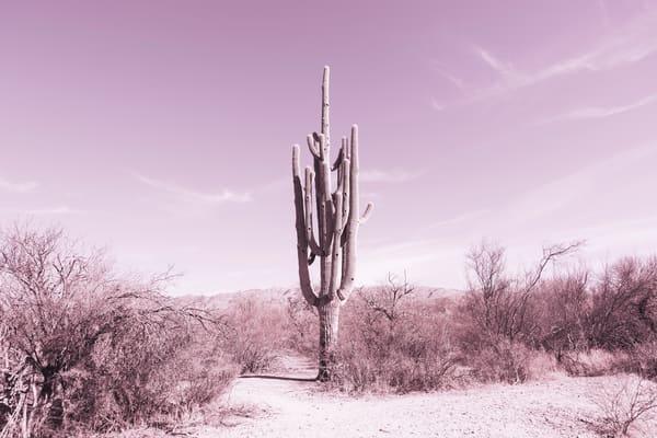 Standing Alone Photography Art   Nathan Larson Photography