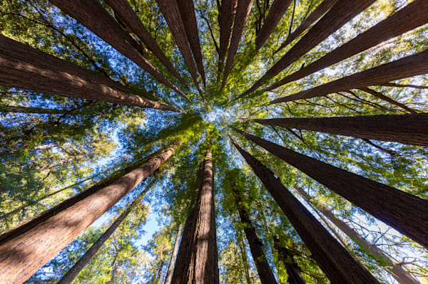 Redwood Fairy Ring 1 Photography Art | FocusPro Services, Inc.