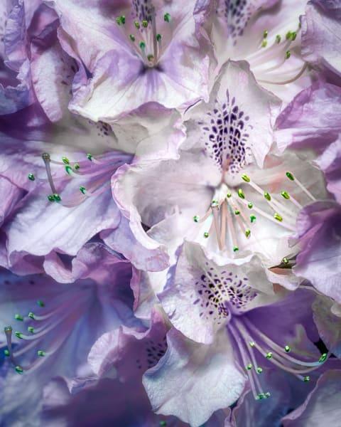 Purple Hydrangeas Art | KJ's Studio