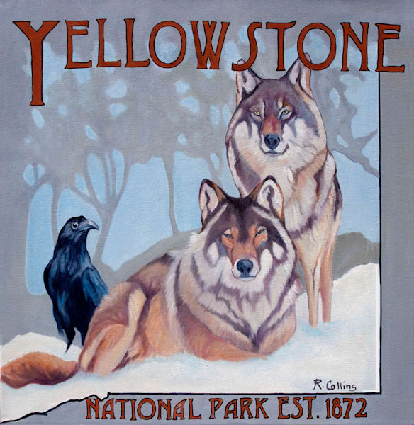 gray wolves of yellowstone