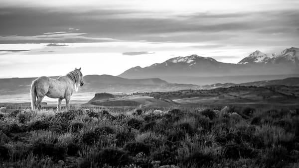 Sundance in black and white