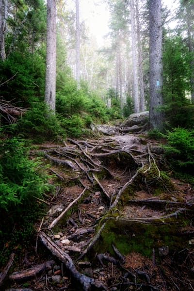 The Forest Gates | Shop Photography by Rick Berk