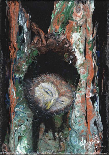 Sleeping Owlet Art   lisaabbott