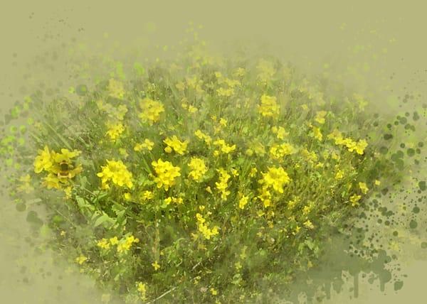 Wild Mustard Art | Art from the Soul