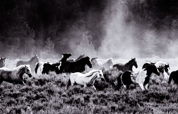 Equine Exodus - afternoon round up of horses in Wyoming photograph print