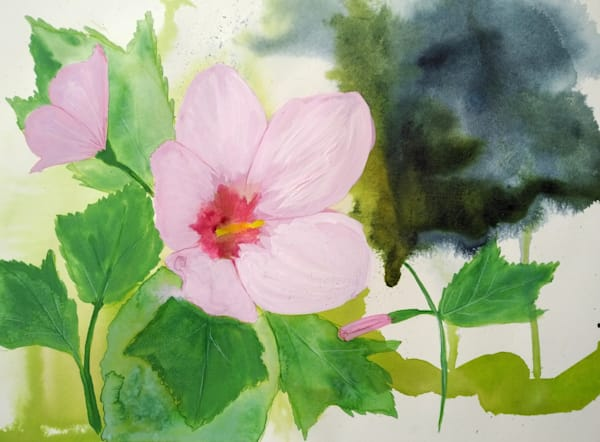 Swamp Mallow by Mary Waltham