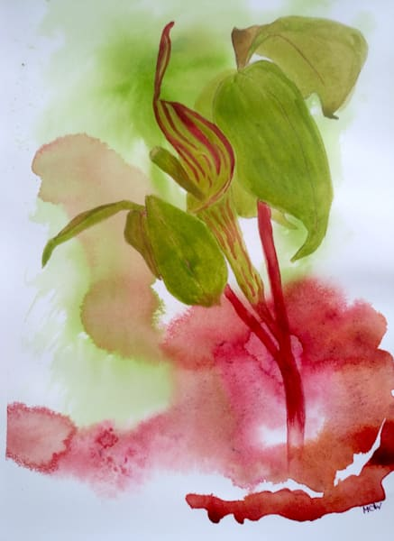 Jack in the Pulpit by Mary Waltham a British Artist