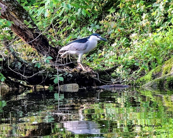 Can T See Me Photography Art | N2 the Woods Photography - Nature and Wildlife Artwork
