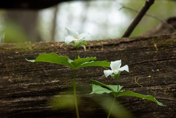 Hidden Forest Treasure