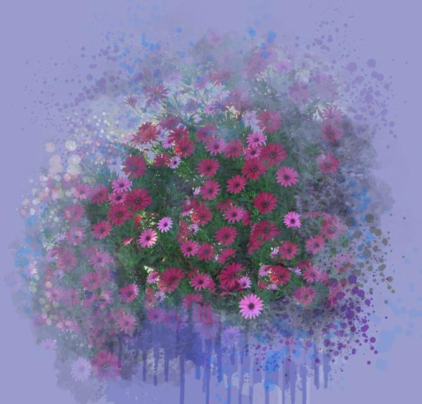 Osteospermum Celebration Art | Art from the Soul