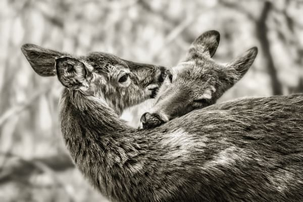 Love And Affection Photography Art | Trevor Pottelberg Photography