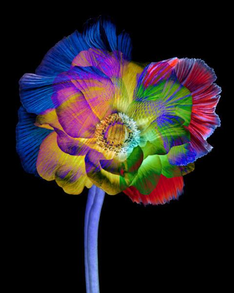 Close up of a blue flower