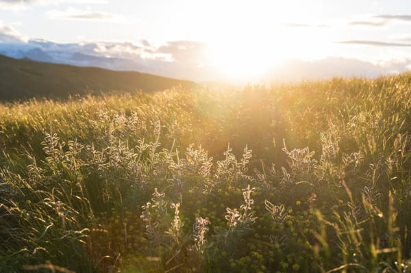 Glowing Fields Photography Art | Call of the Mountains Photography