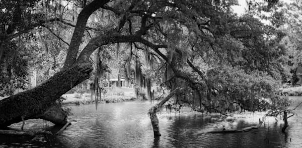 Live Oaks, South Carolina Photography Art   Ursula Hoppe Photography