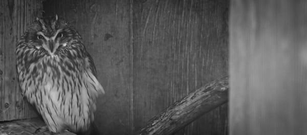 Owl Photography Art   Ursula Hoppe Photography