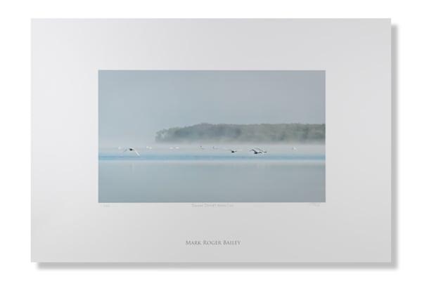 Swans Depart North Cove Art   Mark Roger Bailey   Fine Art Photography