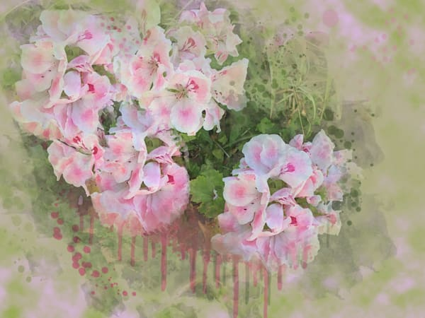 Pelargoniums/Geraniums Art | Art from the Soul