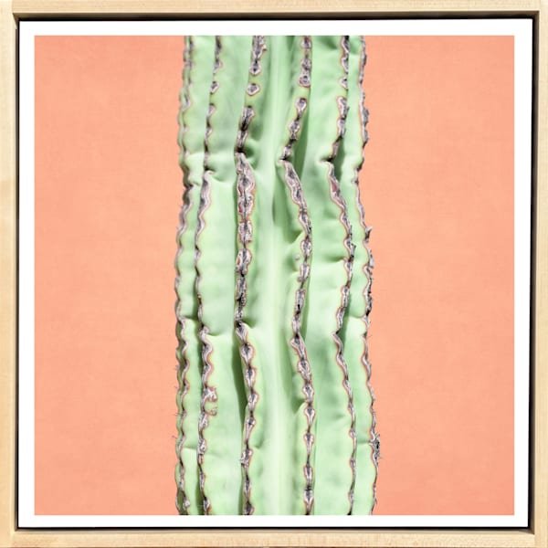 Tropical Plant Pastels #3 Limited Edition Print