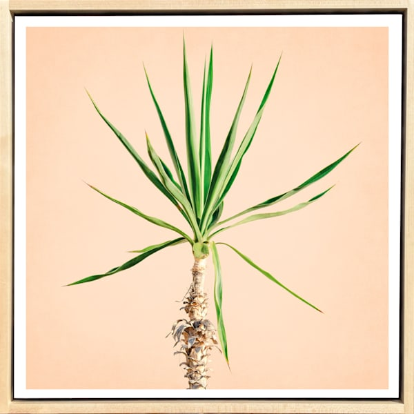 Tropical Plant Pastels #7 Limited Edition Print