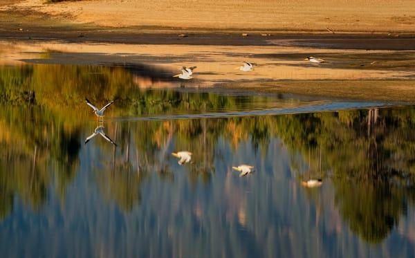 Pelican Formations Iii Photography Art | TheSpiritographer
