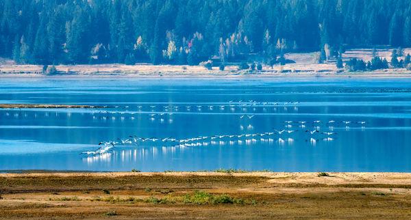 Pelican Formations II