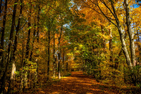 Ontario Autumn, Magical Colored Forest Photography Art   Rick Vyrostko Photography